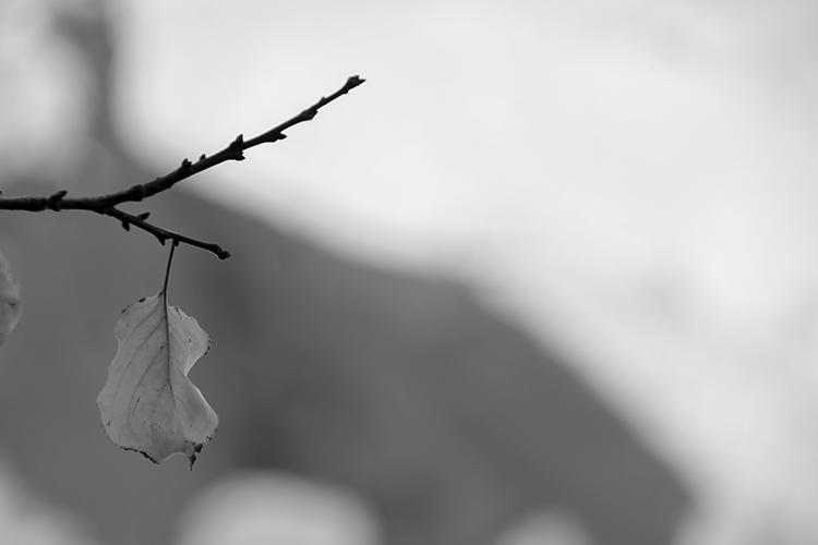 Fall 01 - Sina Nasr