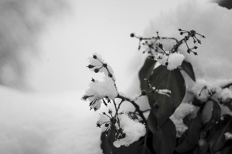 Winter 06 - Sina Nasr