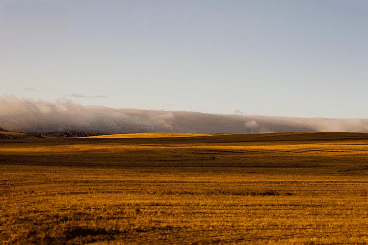 Yellow Field 01 Sina Nasr