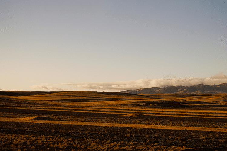 Yellow Field 02 Sina Nasr